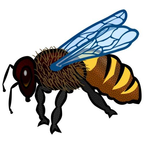 blogs/Terre/abeille.jpg