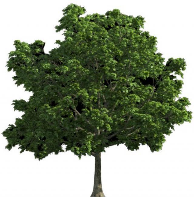 blogs/etat_desprit/arbre.jpg
